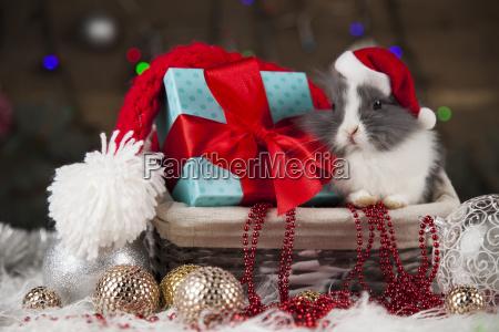 rabbit, in, red, santa, hats, , holiday - 25106038