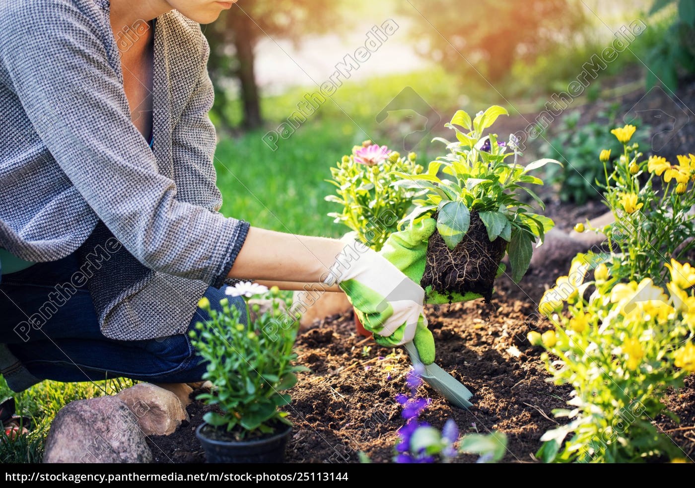 Woman Planting Summer Flowers In Home Garden Bed Royalty Free