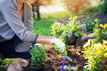 woman planting summer flowers in home