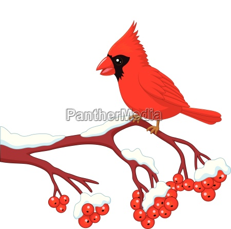 cartoon beautiful cardinal bird posing on