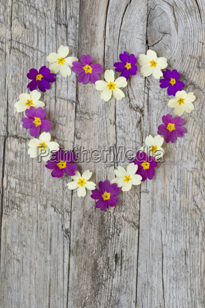 heart formed with primrose blossoms on