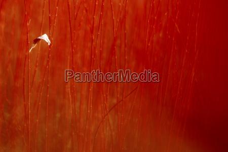 spain autumn leave in wicker blurred