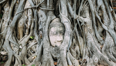 thailand ayutthaya buddha head in between