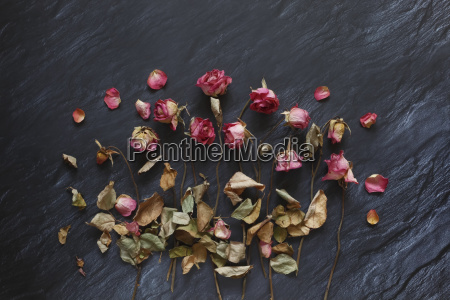 withered roses on slate