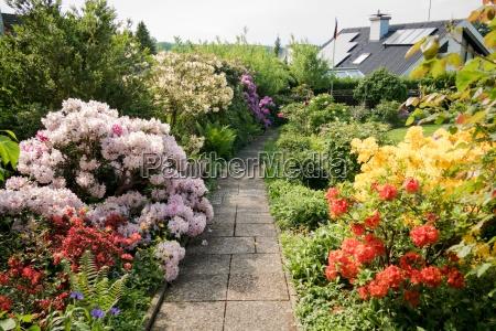 flower fullness in the beautiful garden