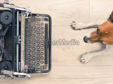 cute dog with an old typewriter