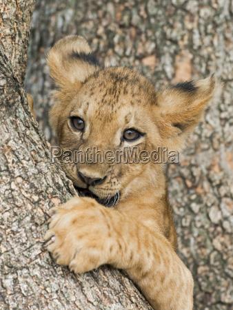 closeup tree trees mammal fauna trunk