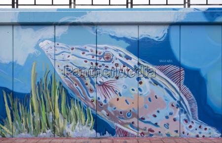 art animal animals fish europe spain