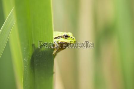 leaf closeup animal amphibian green fauna