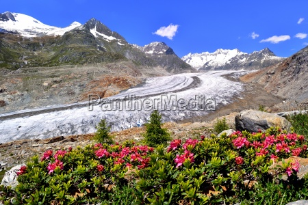 great aletsch glacier unesco world heritage
