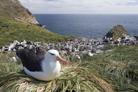 animal fauna animals sights sightseeing atlantic