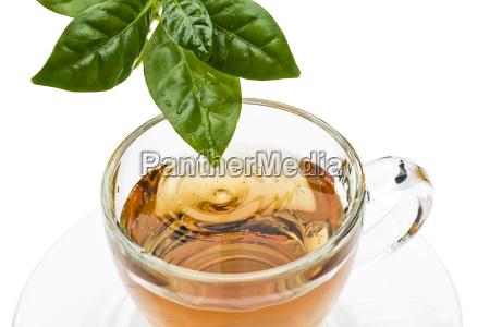 cup, of, tea - 25231924