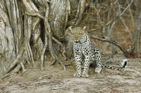 mammal fauna national park africa watchful