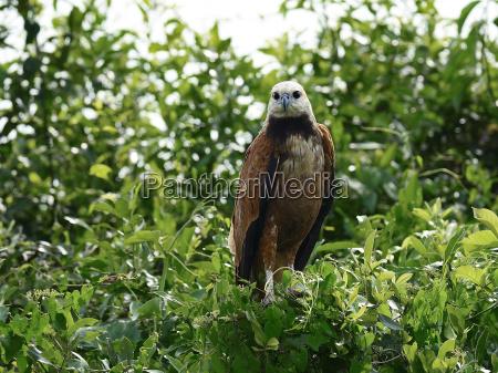 tree trees american animal bird fauna