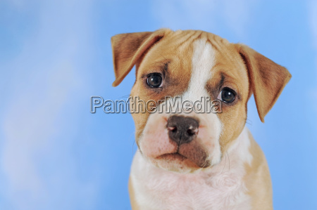 studio photography animal pet mammal animals