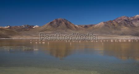flamingos in the salt lake monumento