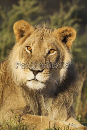 mammal fauna national park africa male