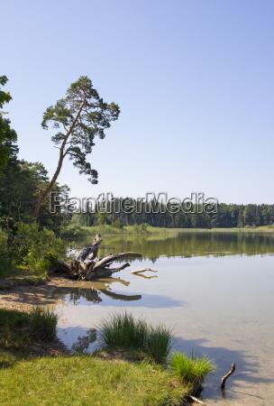 grosser ostersee nature reserve osterseen iffeldorf