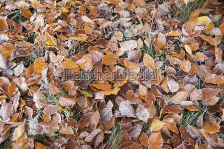 leaf ground soil earth humus brown