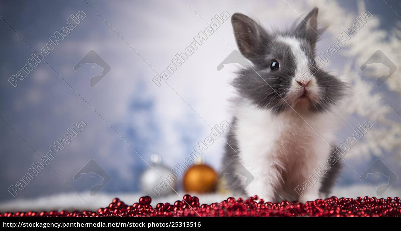 animal, , rabbit, , bunny, on, christmas, background - 25313516