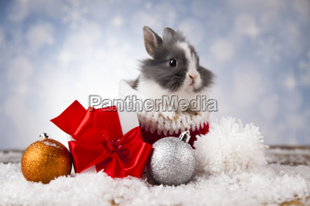 animal, , rabbit, , bunny, on, christmas, background - 25313842