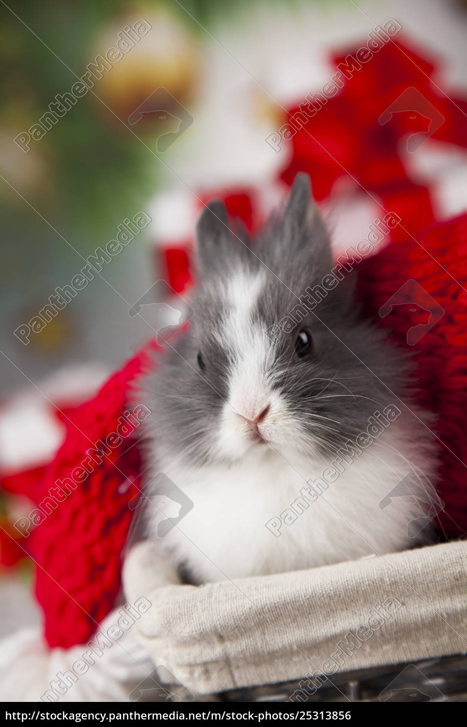 animal, , rabbit, , bunny, on, christmas, background - 25313856