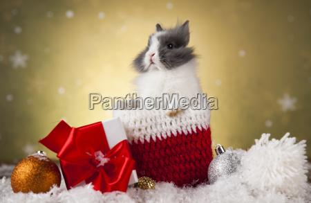 christmas, bunny, , santa, baby, red, hat - 25313230
