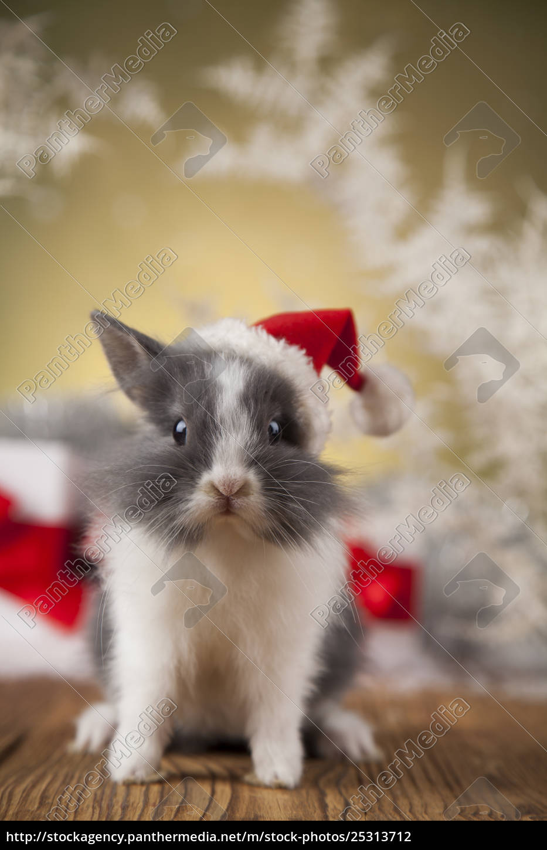 christmas, bunny, , santa, baby, red, hat - 25313712