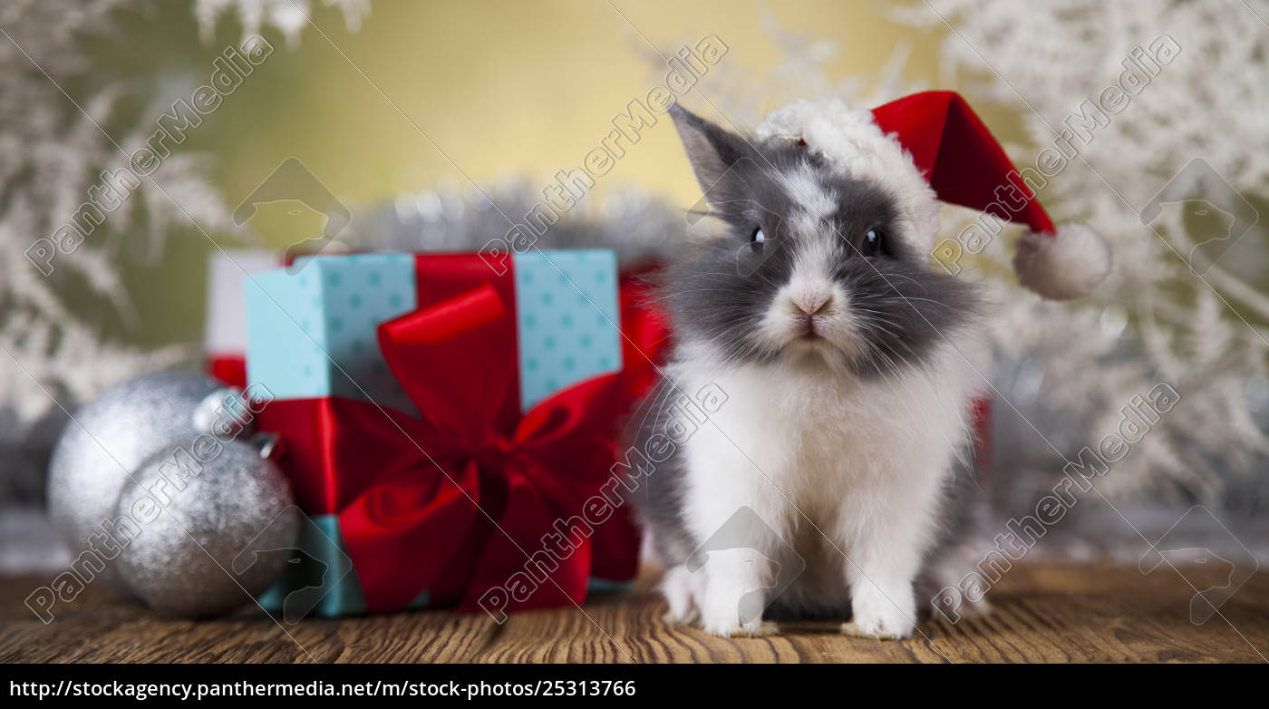 christmas, bunny, , santa, baby, red, hat - 25313766