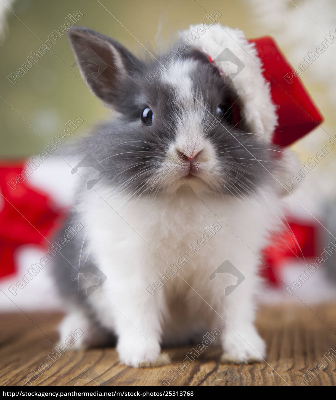 christmas, bunny, , santa, baby, red, hat - 25313768
