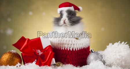 holiday, christmas, bunny, in, santa, hat - 25313248