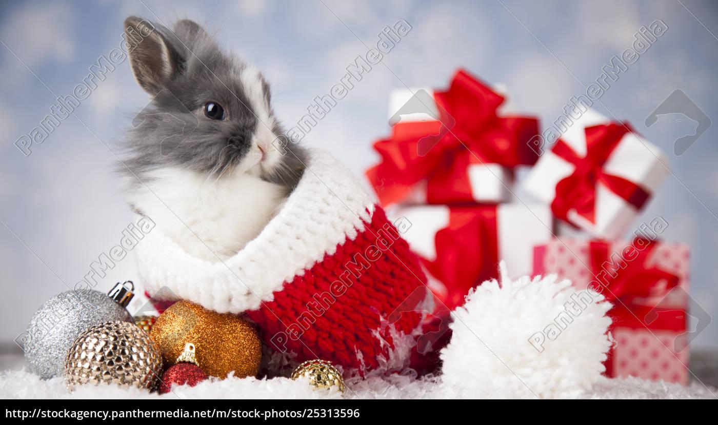holiday, christmas, bunny, in, santa, hat - 25313596