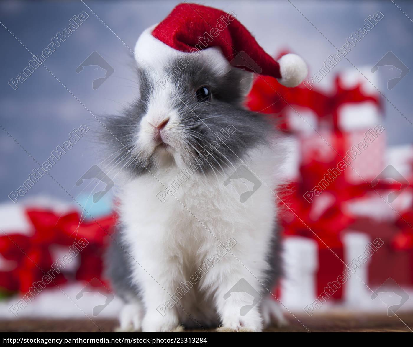 little, bunny, funny, rabbit, on, christmas, background - 25313284