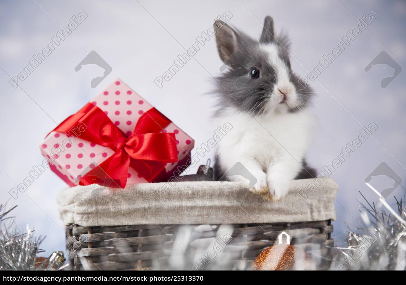 little, bunny, funny, rabbit, on, christmas, background - 25313370