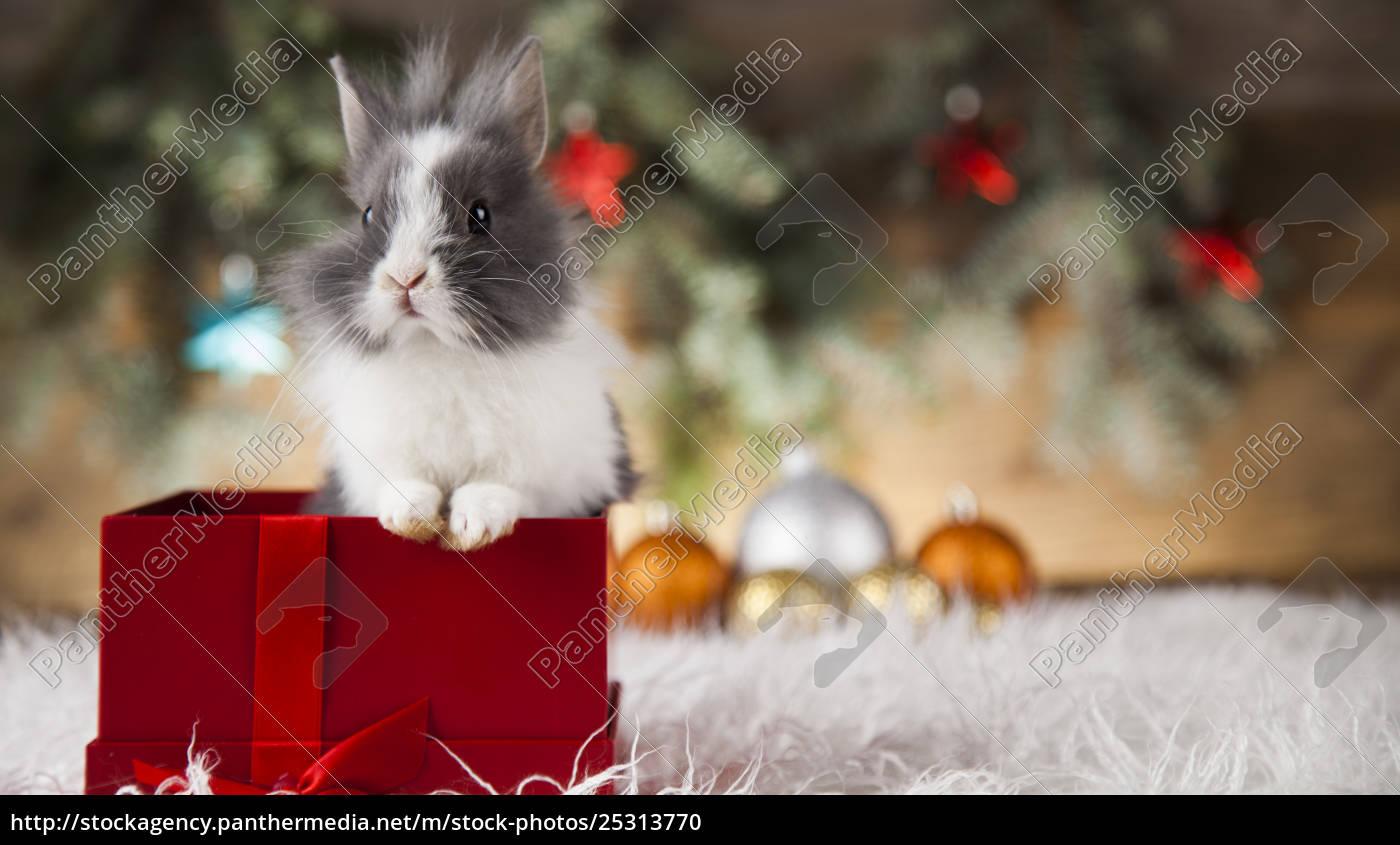 little, bunny, funny, rabbit, on, christmas, background - 25313770