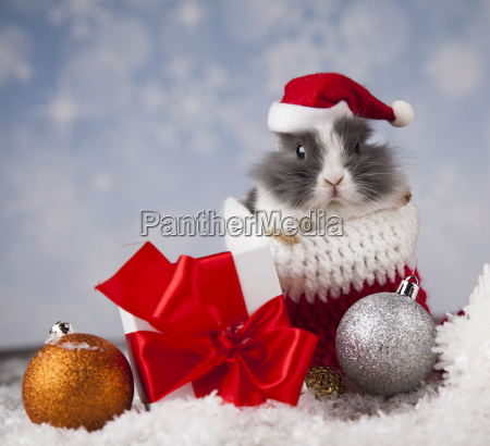 little, bunny, funny, rabbit, on, christmas, background - 25313840