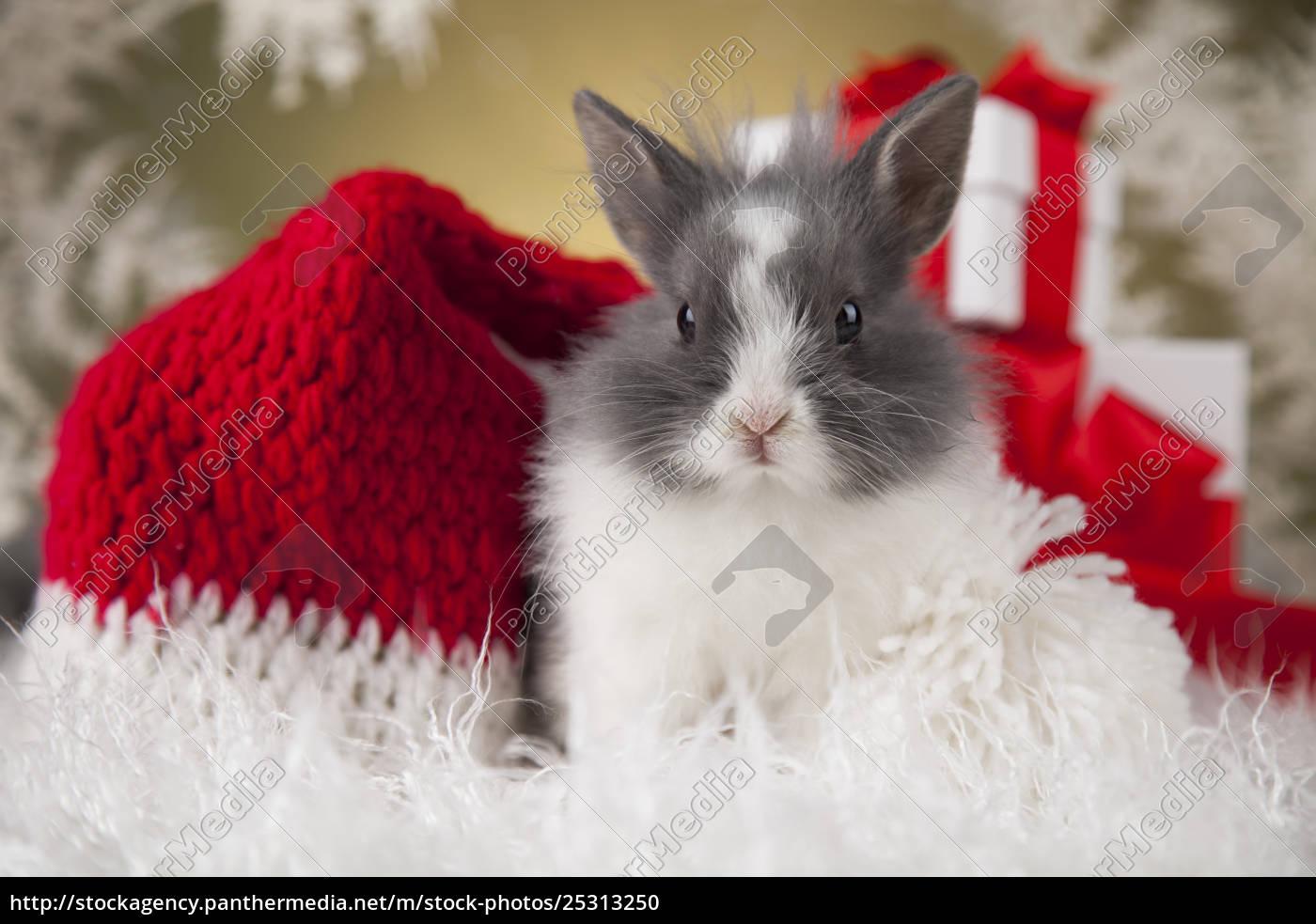 little, santa, bunny, on, christmas, background - 25313250