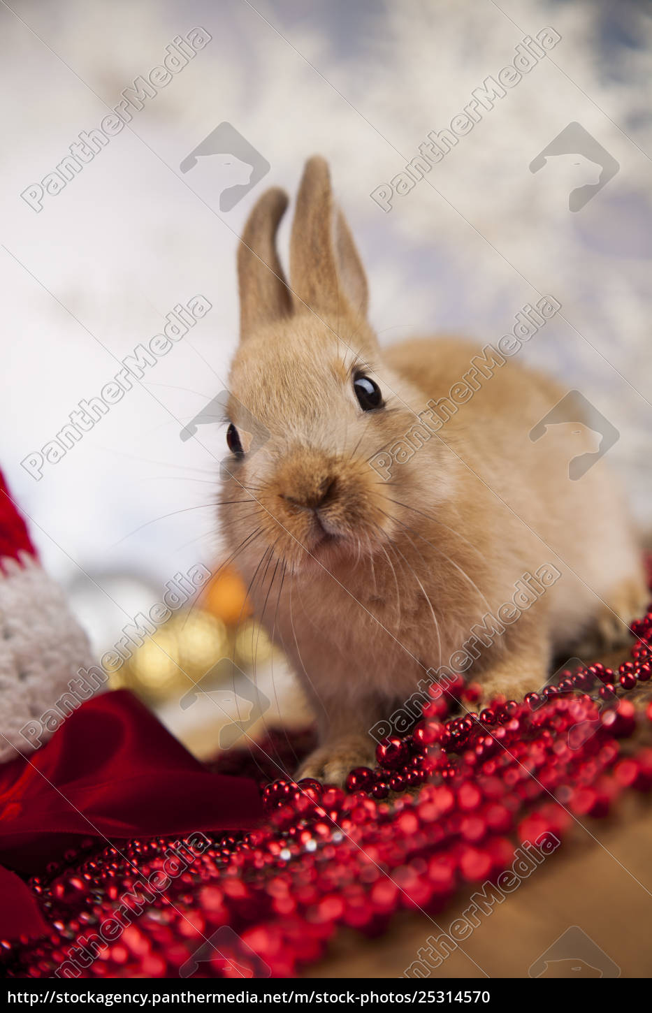 animal, , rabbit, , bunny, on, christmas, background - 25314570