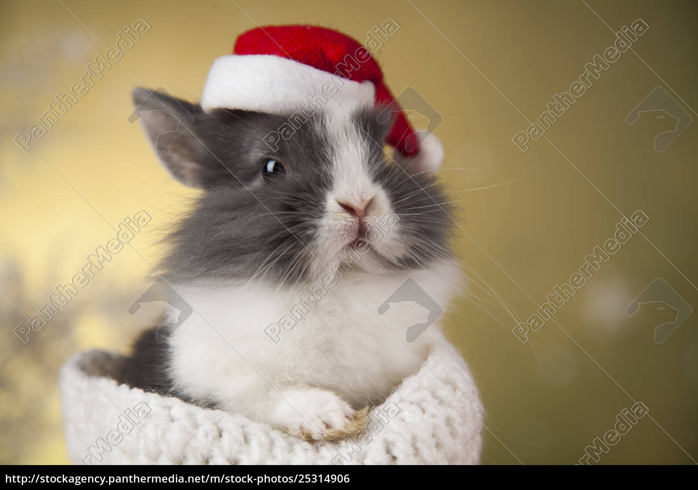 animal, , rabbit, , bunny, on, christmas, background - 25314906