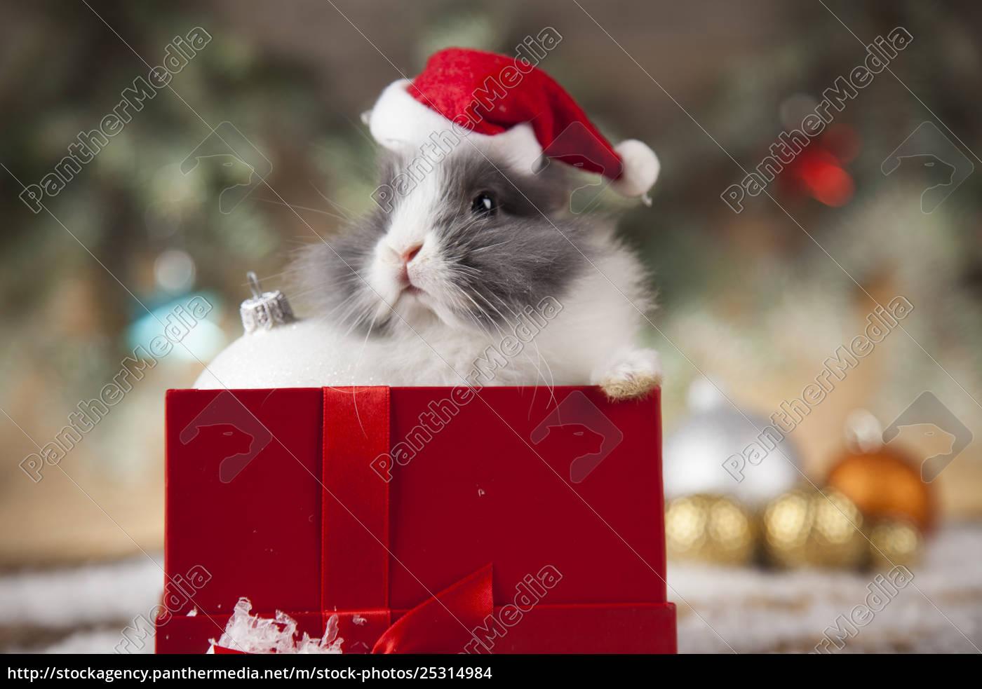 animal, , rabbit, , bunny, on, christmas, background - 25314984