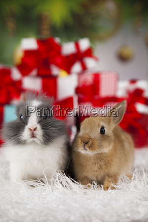 bunny, with, rabbit, , christmas, red, santa - 25314898