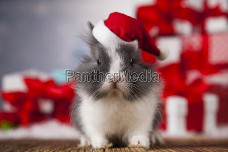 christmas, bunny, , santa, baby, red, hat - 25314346