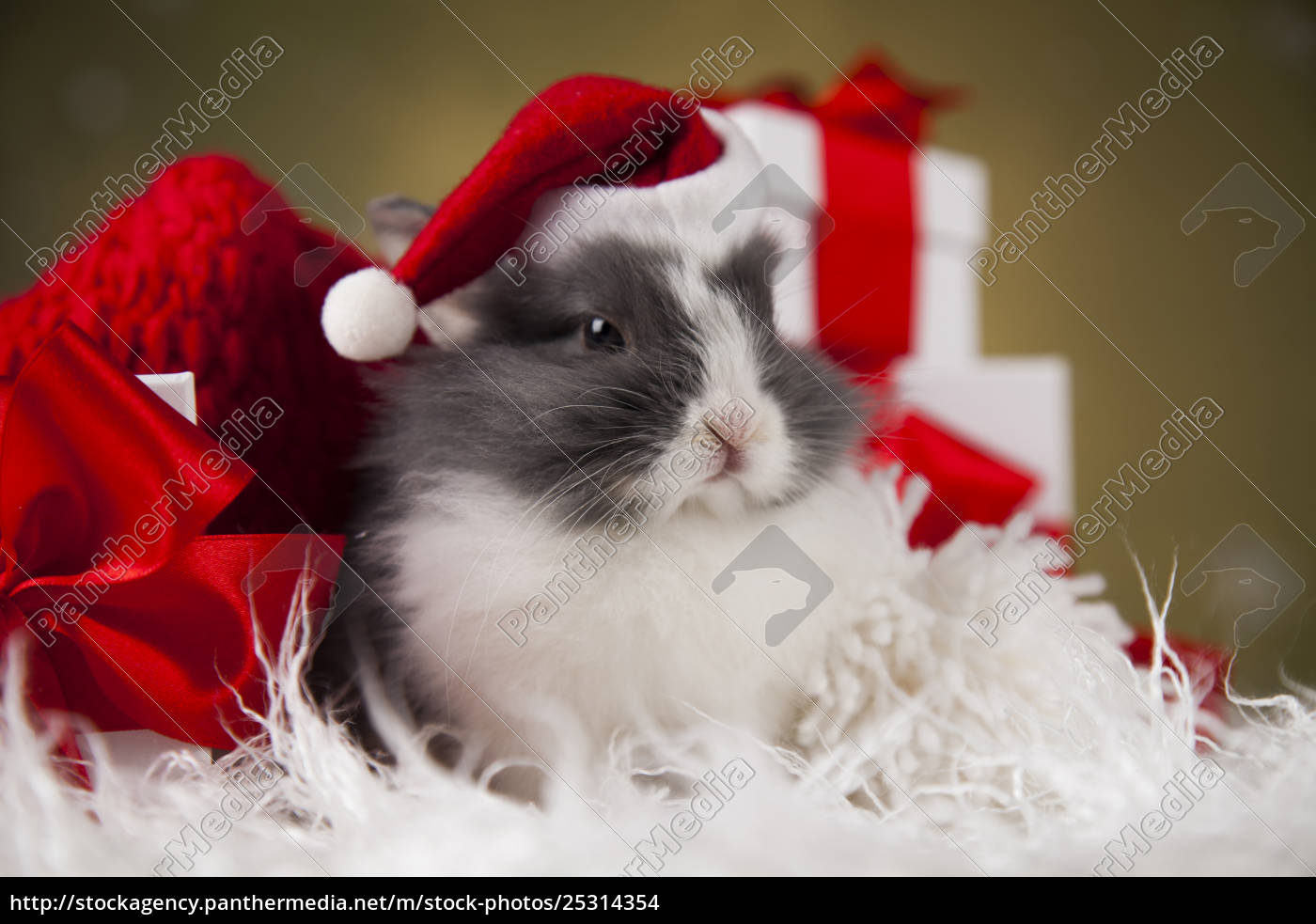 christmas, bunny, , santa, baby, red, hat - 25314354