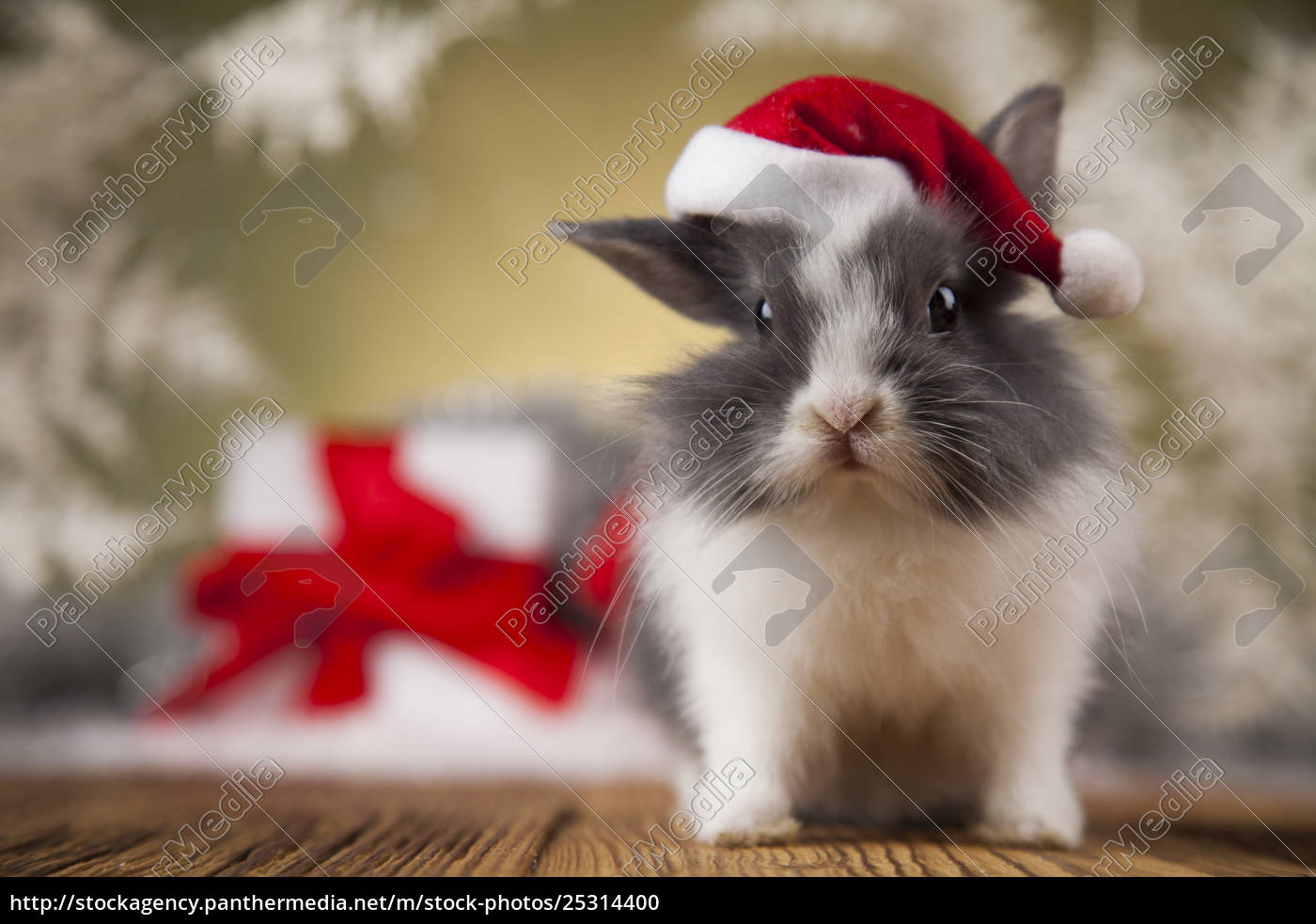 christmas, bunny, , santa, baby, red, hat - 25314400