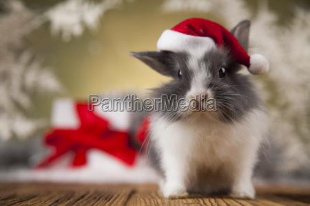 christmas, bunny, , santa, baby, red, hat - 25314400