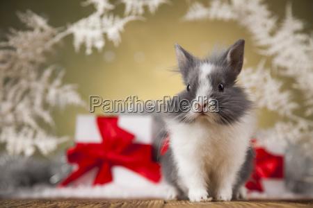 christmas, bunny, , santa, baby, red, hat - 25314428