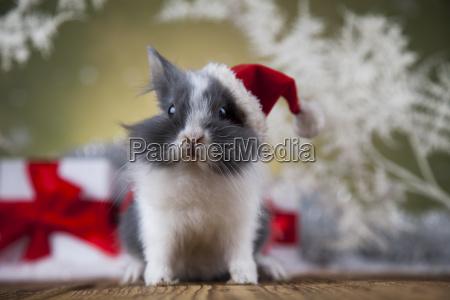 christmas, bunny, , santa, baby, red, hat - 25314520
