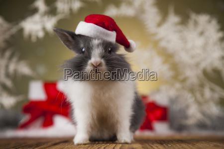 christmas, bunny, , santa, baby, red, hat - 25314586