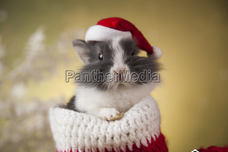 christmas, bunny, , santa, baby, red, hat - 25314834