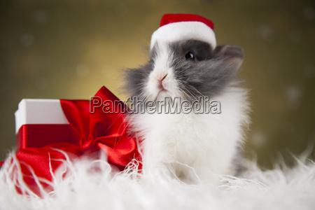 christmas, bunny, , santa, baby, red, hat - 25314916